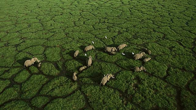 Elephant trails bisect the green grasses of Amboseli National Park, Kenya (© George Steinmetz)