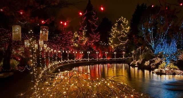 Holiday lighting in Japanese Maple and trees at the VanDusen Botanical Garden Festival of Lights in Vancouve, B.C. Canada