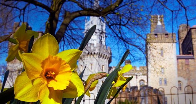 Daffodils in front of Cardiff Castle, Wales