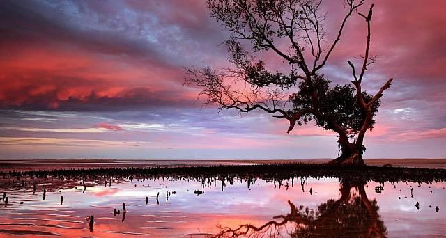 Sunset over a tidal area with a mangrove tree near Brisbane, Australia (© visionandimagination.com/Getty Images)