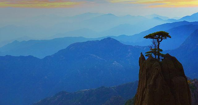 Pine Tree and Mountain Range, White Cloud Scenic Area, Huangshan, Anhui, China