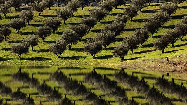 Olive trees reflected in the waters of Barragem de Alqueva (Alqueva Lake) near Alqueva, Portugal (© Paul Bernhardt/Lonely Planet)