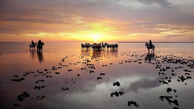 A silhouette of Guardians standing by a herd of white horses at sunrise in the Camargue (© SIME / eStock Photo)