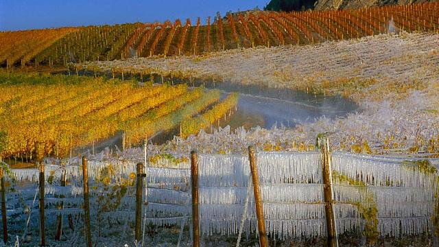 Vineyards covered with icicles for the ice wine harvest, South Okanagan Valley, British Columbia, Canada (© Gunter Marx/Alamy)