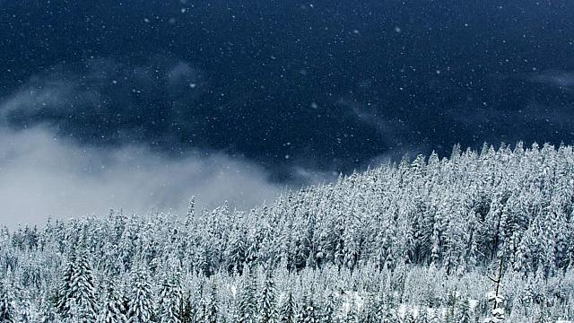 Snow falling on trees in Squamish, British Columbia, Canada (© Getty Images)