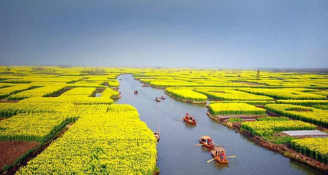 Tourists take boats as they visit an expanse of flowering cole fields near Xinghua city, east China's Jiangsu province (© Wang Kaicheng)