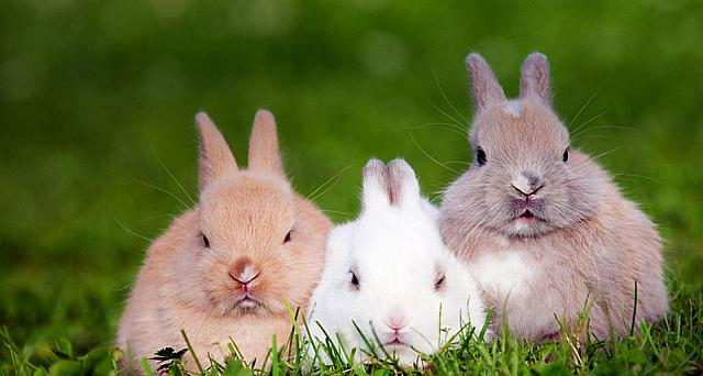 Three rabbits sitting on the grass