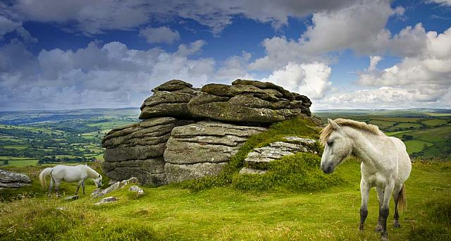 Ponies grazing at Chinkwell Tor, Dartmoor, UK