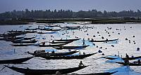 Fishermen set nets for shrimp larvae, Khulna Province, Bangladesh