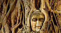 A stone Buddha head sits entwined in the roots of a fig tree in the ancient ruins of Wat Mahatat, in Ayutthaya, Thailand