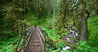 Trail in the Columbia River Gorge National Scenic Area, Oregon