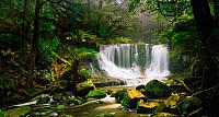 Horseshoe Falls, surrounded by rainforest, in the Mount Field National Park, Australia