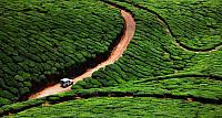 Vehicle traveling through a tea plantation in Kerala, Southern India