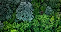 Aerial view of forest near Johor, Malaysia