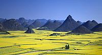 Field mustard field and Kinkei peak, Luoping, Yunnan province, China