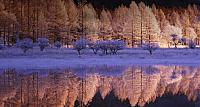 Hoarfrost ice covering the ground at the Odashirogahara marshland, near Nikko  in Tochigi Prefecture, Japan