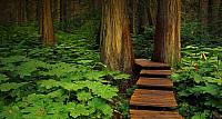 Boardwalk in Mount Revelstoke National Park, British Columbia, Canada
