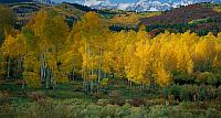 Snowcapped San Juan range above the autumn colors in Dallas Creek Valley, Uncompahgre National Forest, Colorado