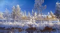 Trees and plants covered with snow in Dalarna, Sweden (© Lars Dahlstrom/Aurora Photos)
