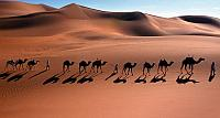 Camel caravan through the Sahara Desert near Djanet, Algeria (© Frans Lemmens)