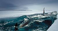 Orca Whales make deep dives under ice to hunt Antarctic cod in McMurdo Sound