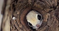 Squirrel hiding in a tree