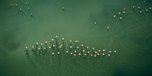 Flamingos take flight, Lake Magadi, Kenya (© Bobby Haas/Getty Images)