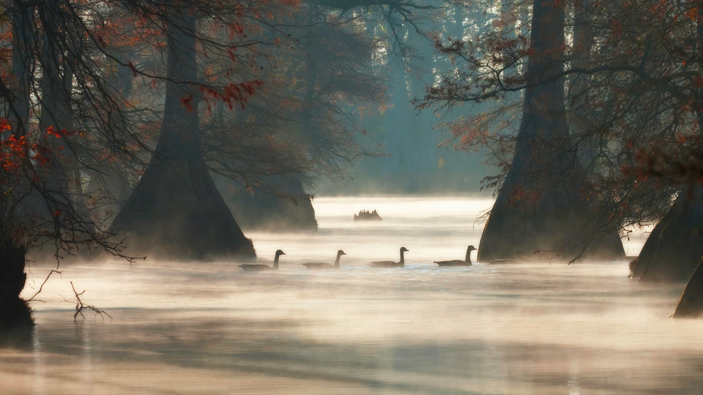 Canada geese in Hill Lake, Pulaski County, Arkansas, USA (© Barry Hamilton/Corbis)