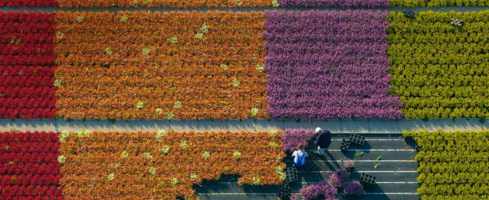 Aerial view of a flower farm, North Rhine-Westphalia, Germany (© Hans Blossey/Corbis)