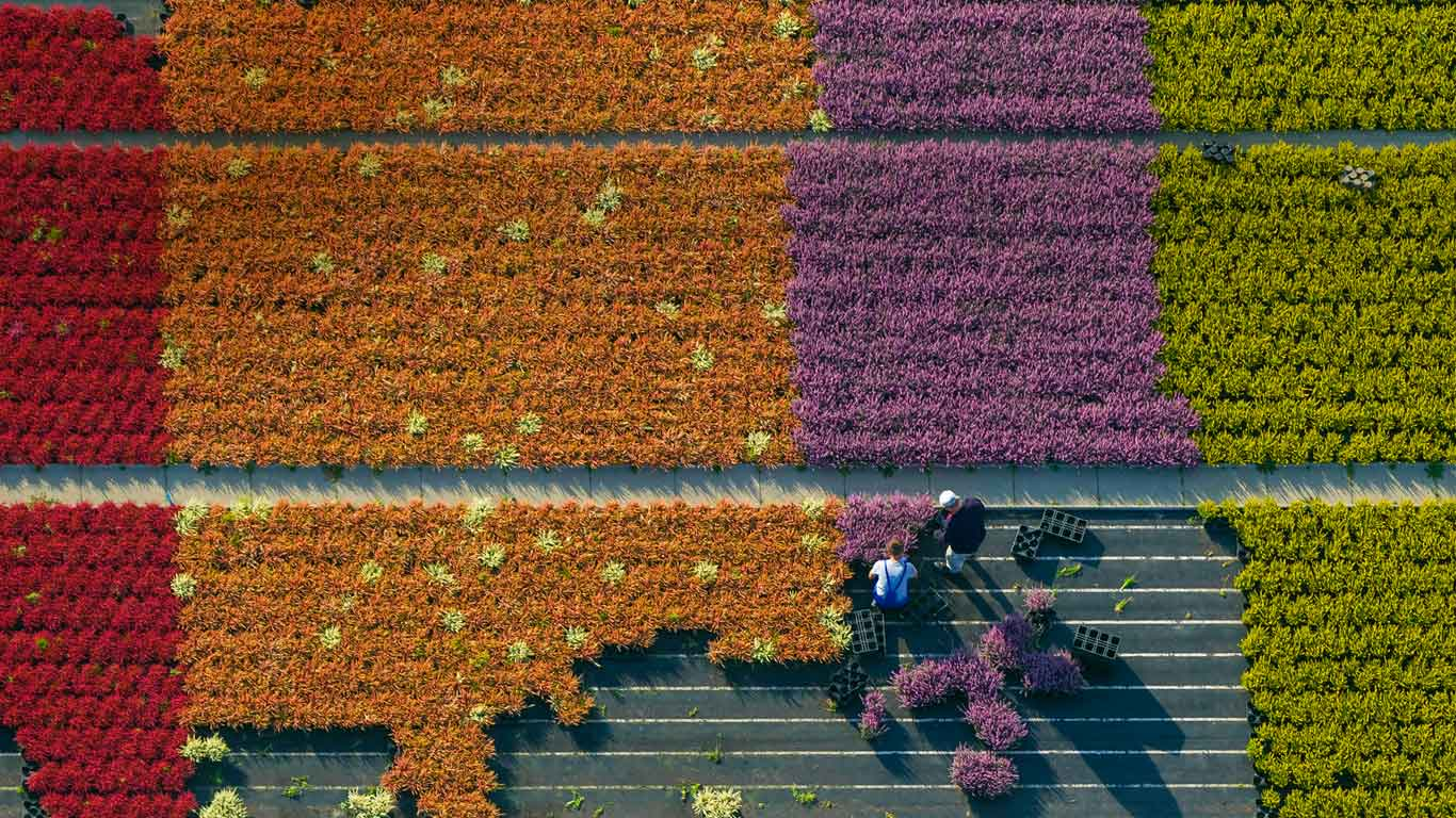 Aerial view of a flower farm, North Rhine-Westphalia, Germany (© Hans Blossey/Corbis)