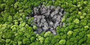 Rainforest trees burnt by lightning in Daintree National Park, Far North Queensland, Australia (© Peter Adams/plainpicture)