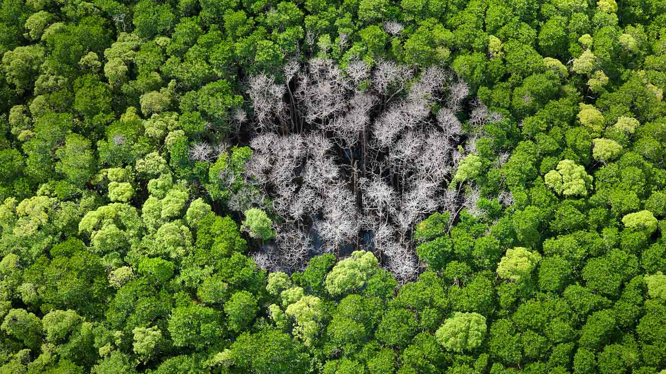 Rainforest trees burnt by lightning in Daintree National Park, Far North Queensland, Australia (© Peter Adams/plainpicture)
