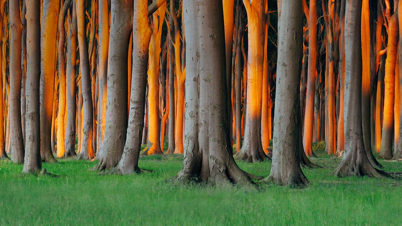 Nienhagen Wood in Mecklenburg-Vorpommern, Germany (© Radius Images/Alamy)