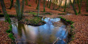 Autumnal forest, Sweden (© Hans Wretling/Corbis)
