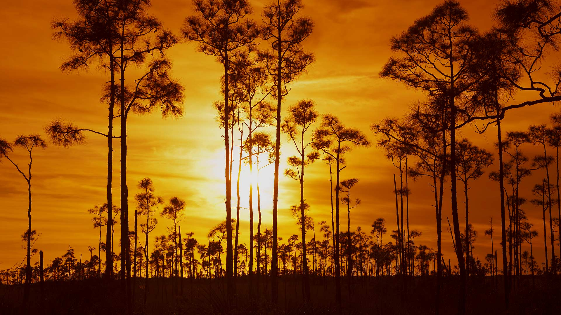 Everglades National Park, Florida (© Angelo Cavalli/Aurora Photos)