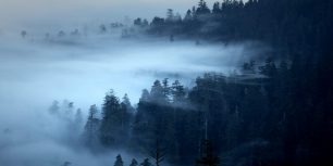 The Redwood National and State Parks of California (© David Fortney/Corbis Motion)