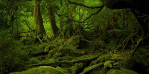 Mononoke Hime no Mori on Yakushima, Japan (© Hiroyuki Nagaoka/Getty Images)
