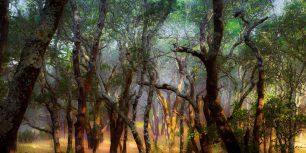 Foothill Regional Park near Windsor, California (© Ron Koeberer/Tandem Stills + Motion)