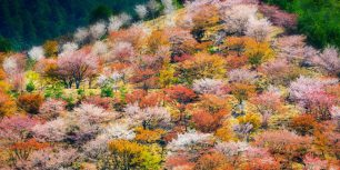 Spring cherry blossoms on Mount Yoshino in Nara Prefecture, Japan (© Sean Pavone/Alamy)