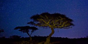 Acacia trees in Lewa Wildlife Conservancy, Kenya (© Marc Muench/Tandem Stills + Motion)