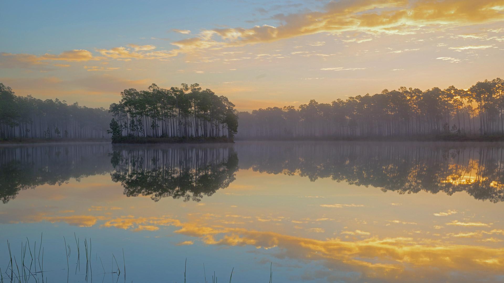 Long Pine Key in Everglades National Park, Florida (© Tandem Stills + Motion)