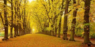 Avenue in autumn, Dinkelsbühl, Bavaria, Germany (© Aflo Relax/Masterfile)