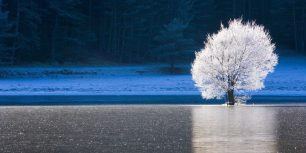 Frozen lake and frost-covered tree in Caille, Alpes-Maritimes, Provence-Alpes-Côte d'Azur, France (© Jean-Pierre Pieuchot/Getty Images)