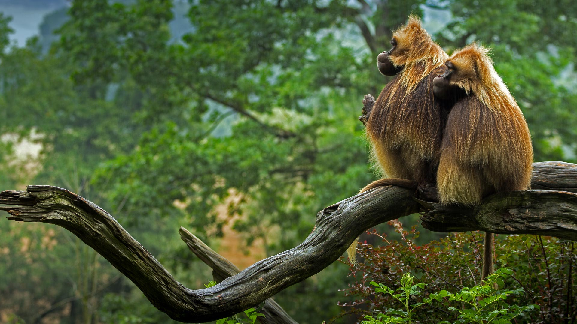 Geladas in repose (© Pavel Blažek/500px)