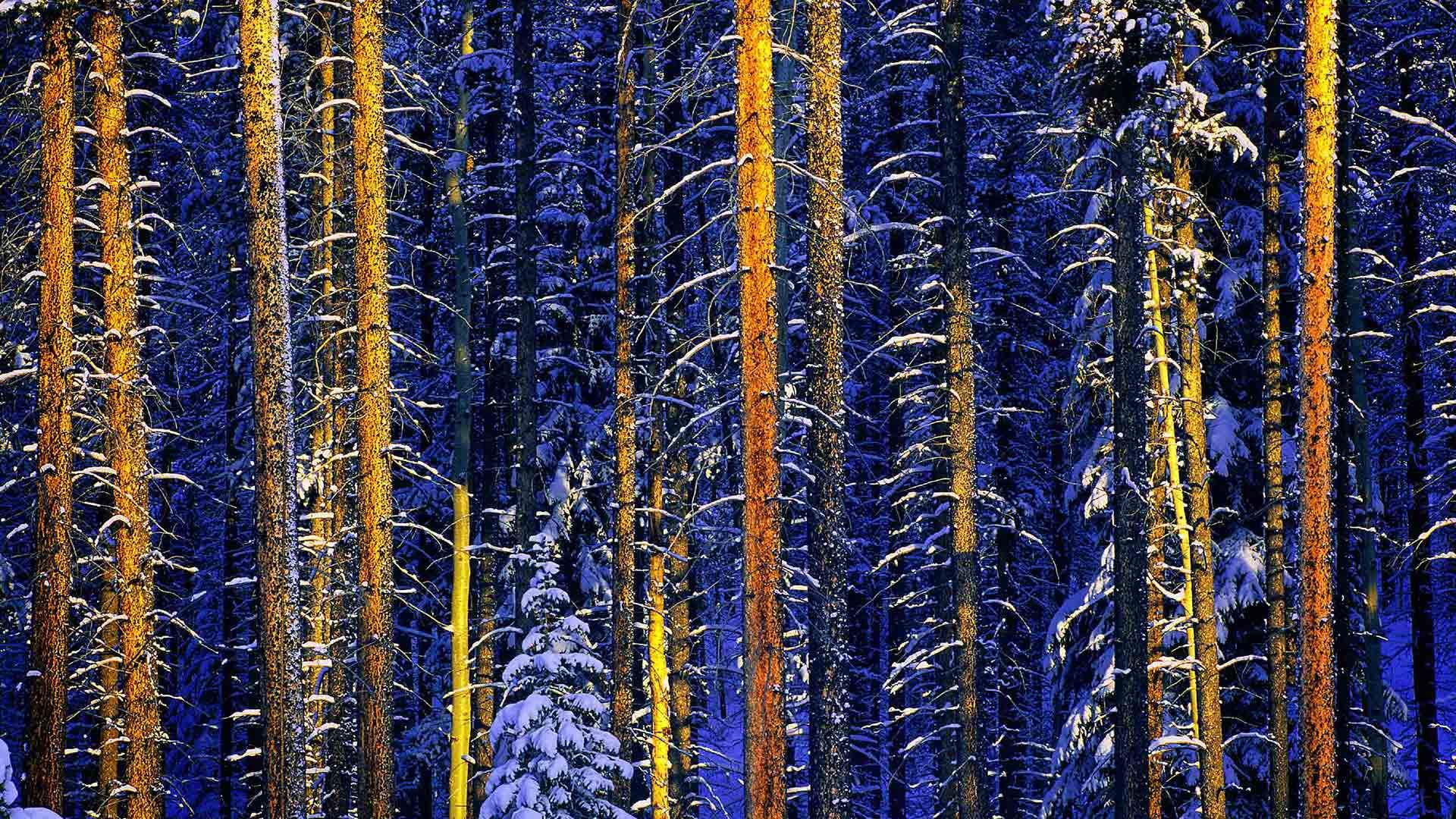 Jasper National Park, Alberta, Canada (© Daryl Benson/Masterfile/Corbis)