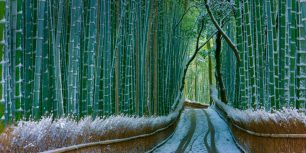 Sagano bamboo forest, Arashiyama, Kyoto, Japan (© JTB Photo Communications, Inc./age fotostock)