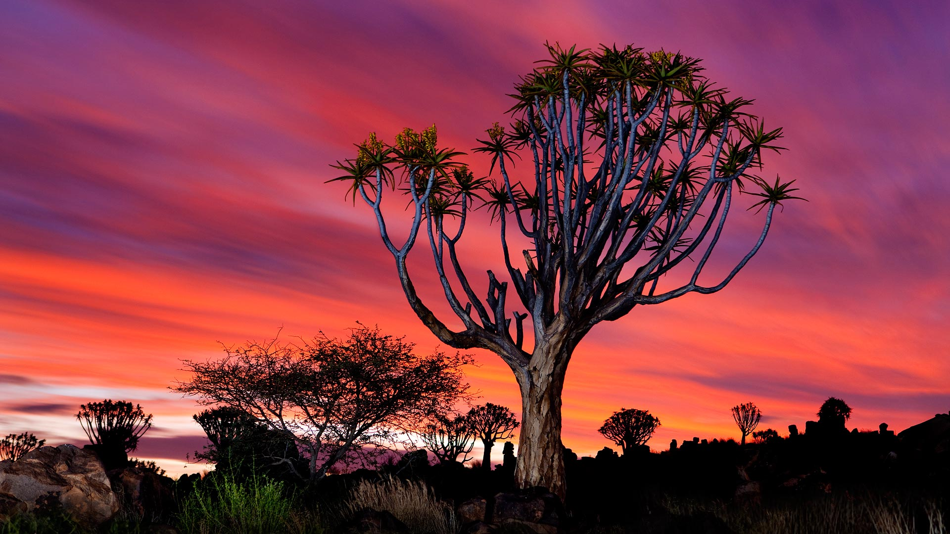 The Quiver Tree Forest near Keetmanshoop, Namibia (© Barry Lewis/Corbis)