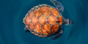 A green sea turtle shows off its shell (© Sergi Garcia Fernandez/Minden Pictures)