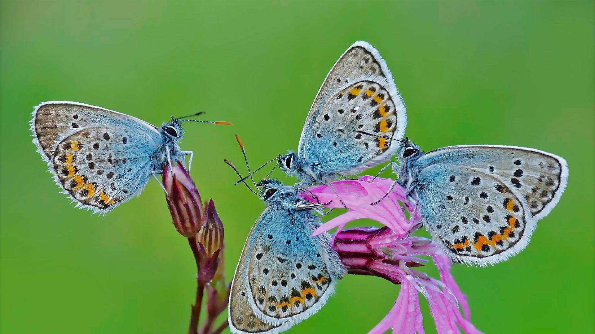 Butterflies in the Regional Park of Castelli Romani, Italy (© Solent News/Splash News/Corbis)