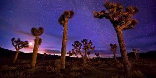 Joshua trees in Death Valley, California (© Marc Adamus/Aurora Photos)